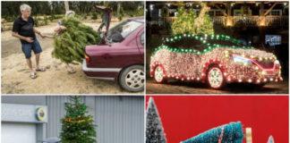 елки на машинах